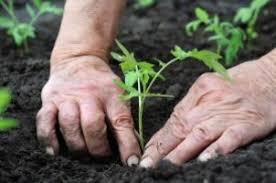 Image of gardening